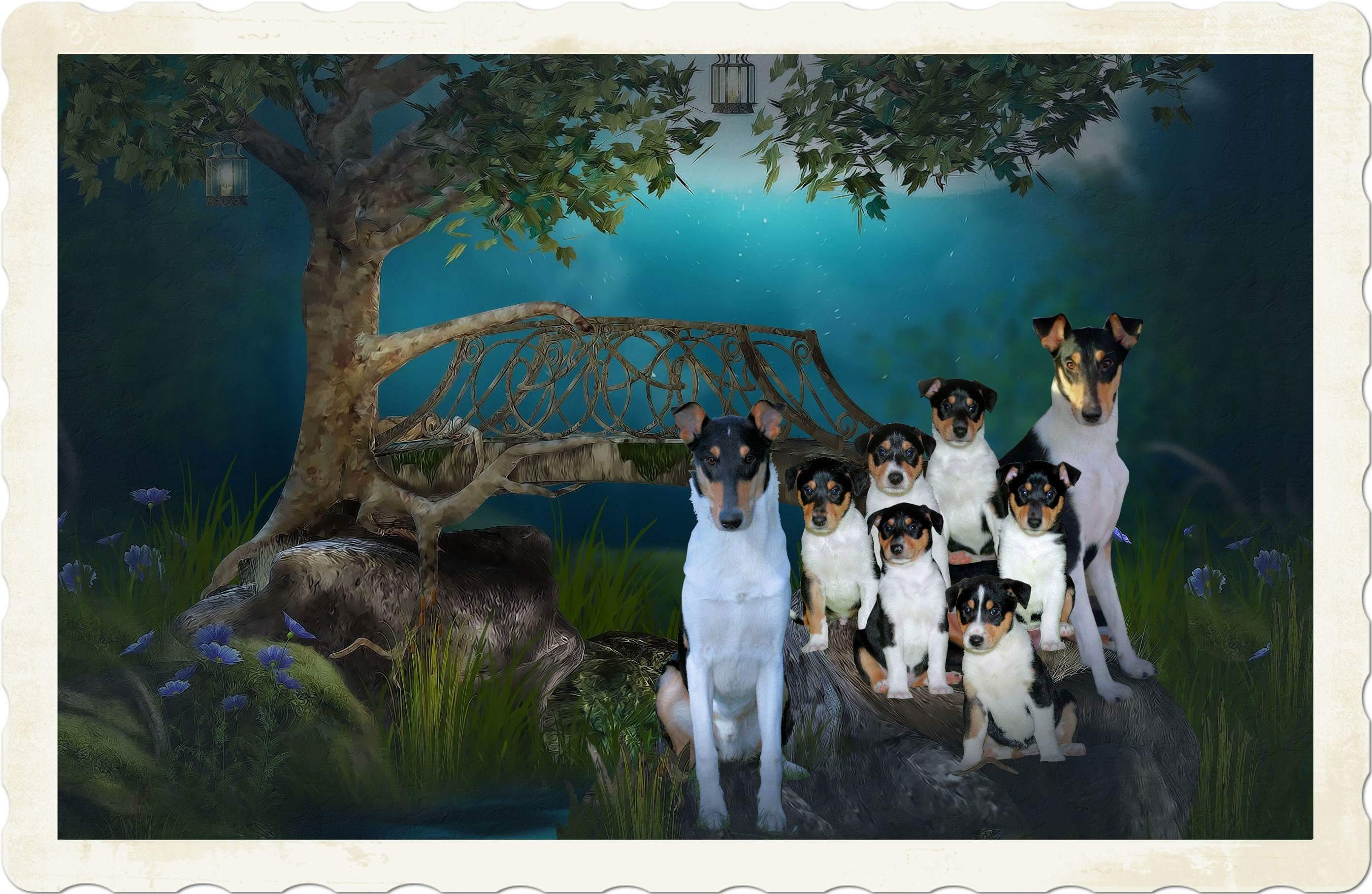 Ragnar Nala & pups